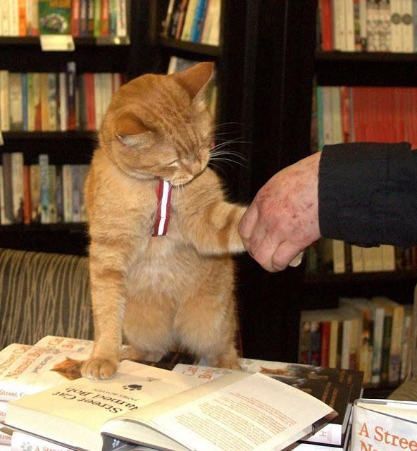 Amazing Bob Cats Ideas Street Cat Bob Ginger Cats Cats
