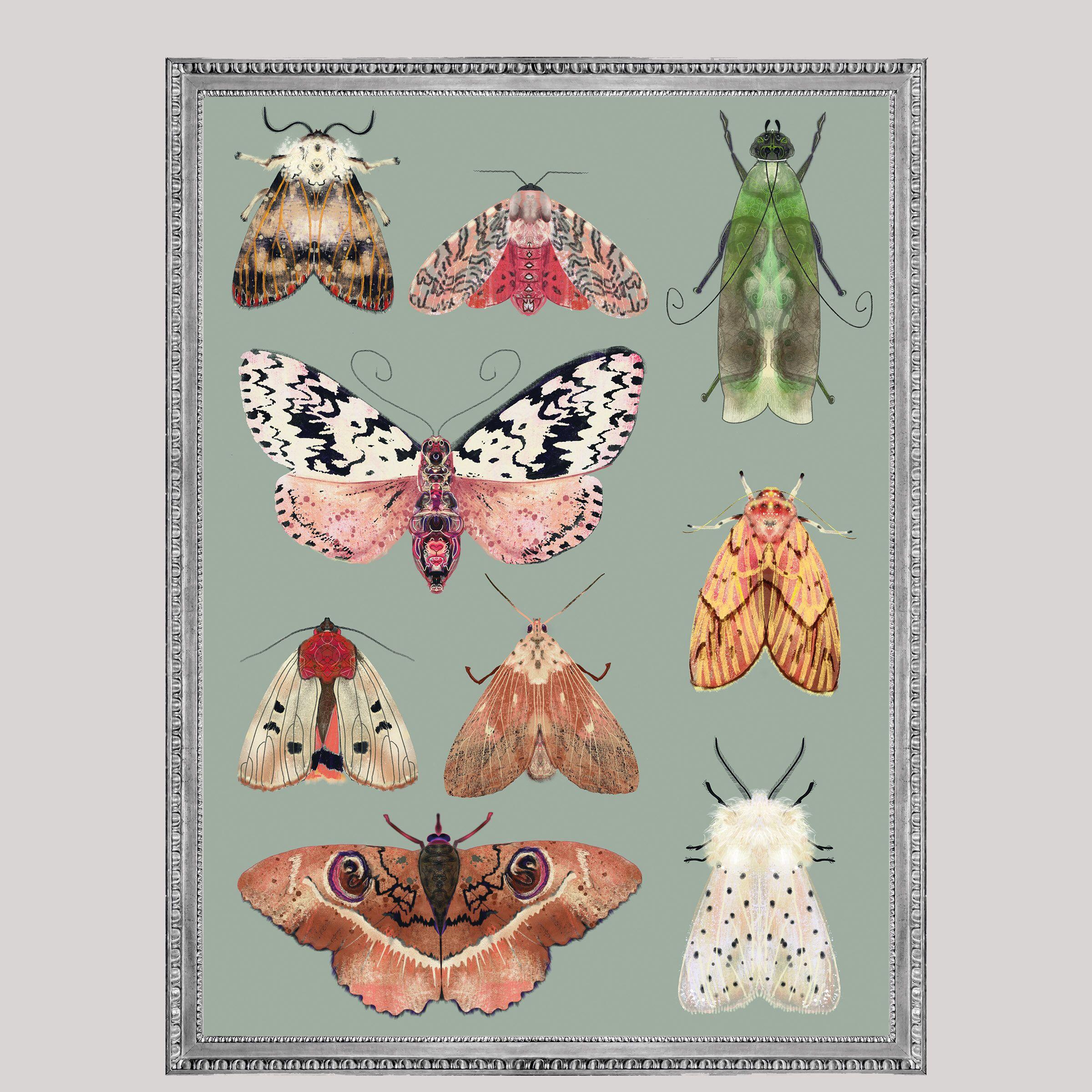 Motten Collage Groen Digitale Insectenprint Afdrukbare Kunst Aan De Muur Digital Print Illustration Blogger Themes Butterfly
