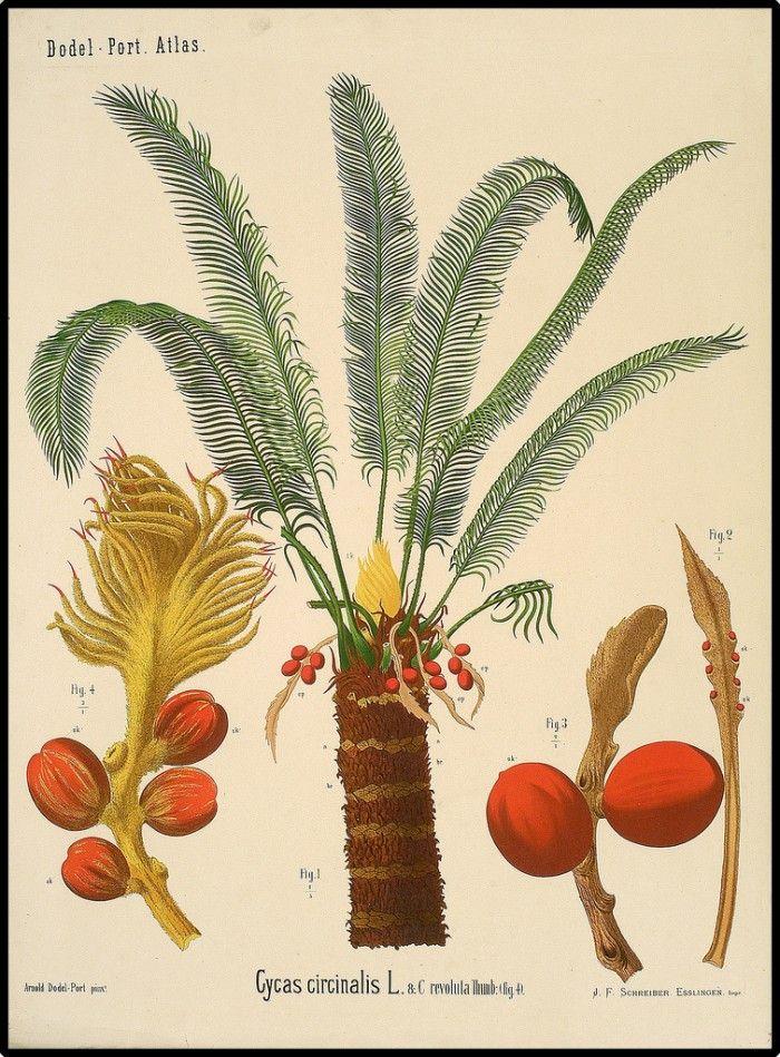 BibliOdyssey - Plant Anatomy Charts | Anatomy and Plants