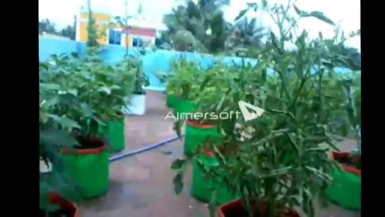 Maadi Thottam Organic Terrace Garden Chennai Avadi Terrace Garden Garden Terrace