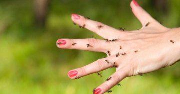 1000 ideas about ameisen hausmittel on pinterest hausmittel gegen ameisen ameisen im garten. Black Bedroom Furniture Sets. Home Design Ideas