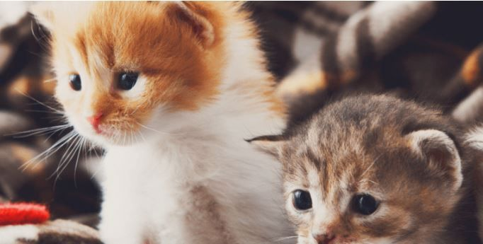 "Kittens Born To Feral Cats Can Still Be ""Purr""Fect Pets"