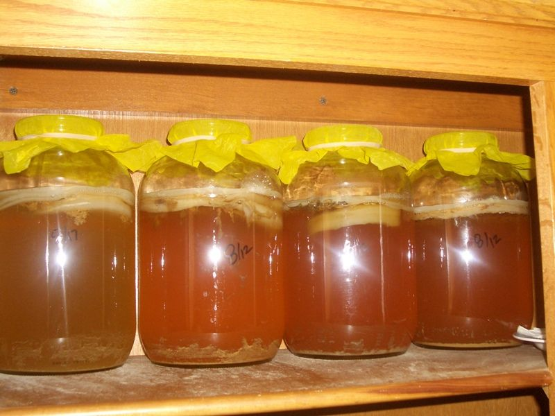 How To Estimate The Perfect Kombucha Brew Time Kombucha Kombucha Scoby Kombucha Fermentation