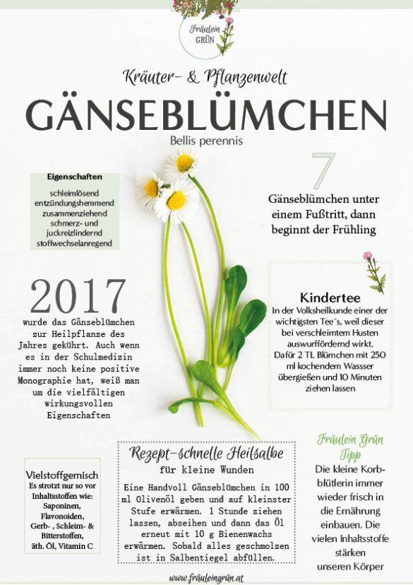 Infografiken Kräuter- & Pflanzenwelt - Download -
