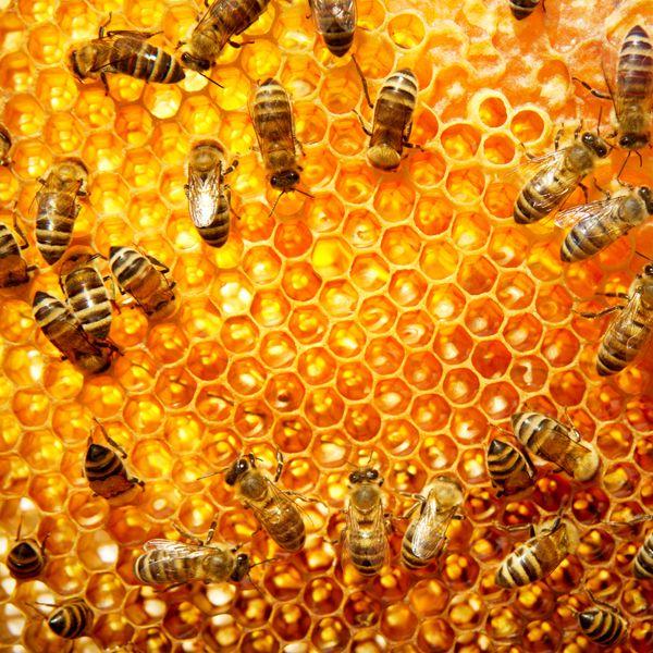 pollinatorprotect