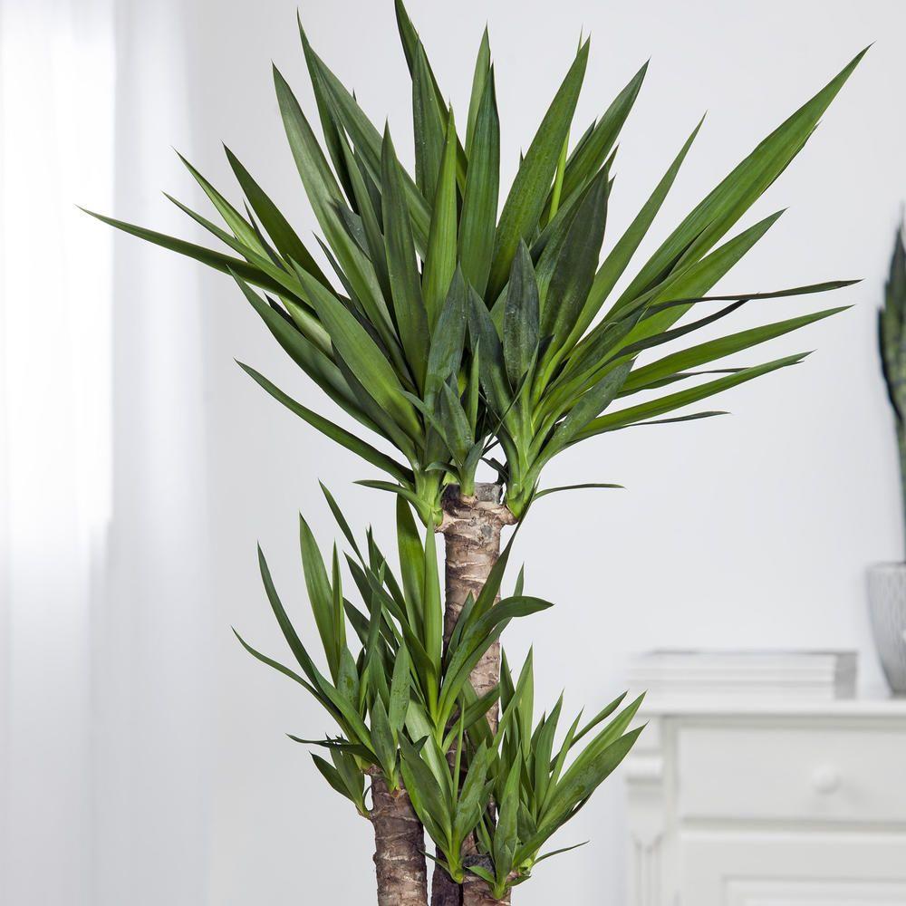 ungiftige zimmerpflanzen
