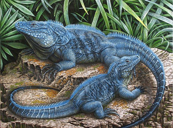 Blue Iguana Posters for Sale