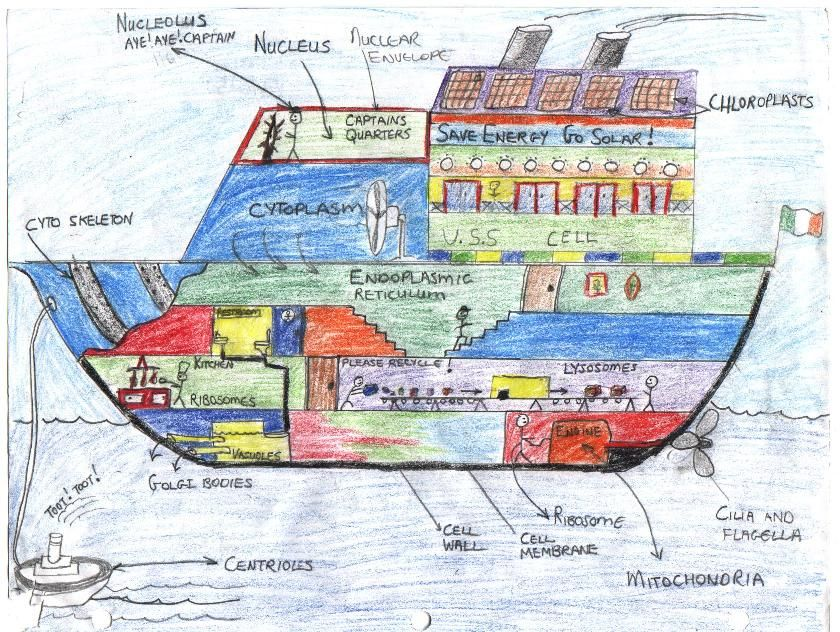 Cell Projects A Ship Uss Cell Stem Education Pinterest