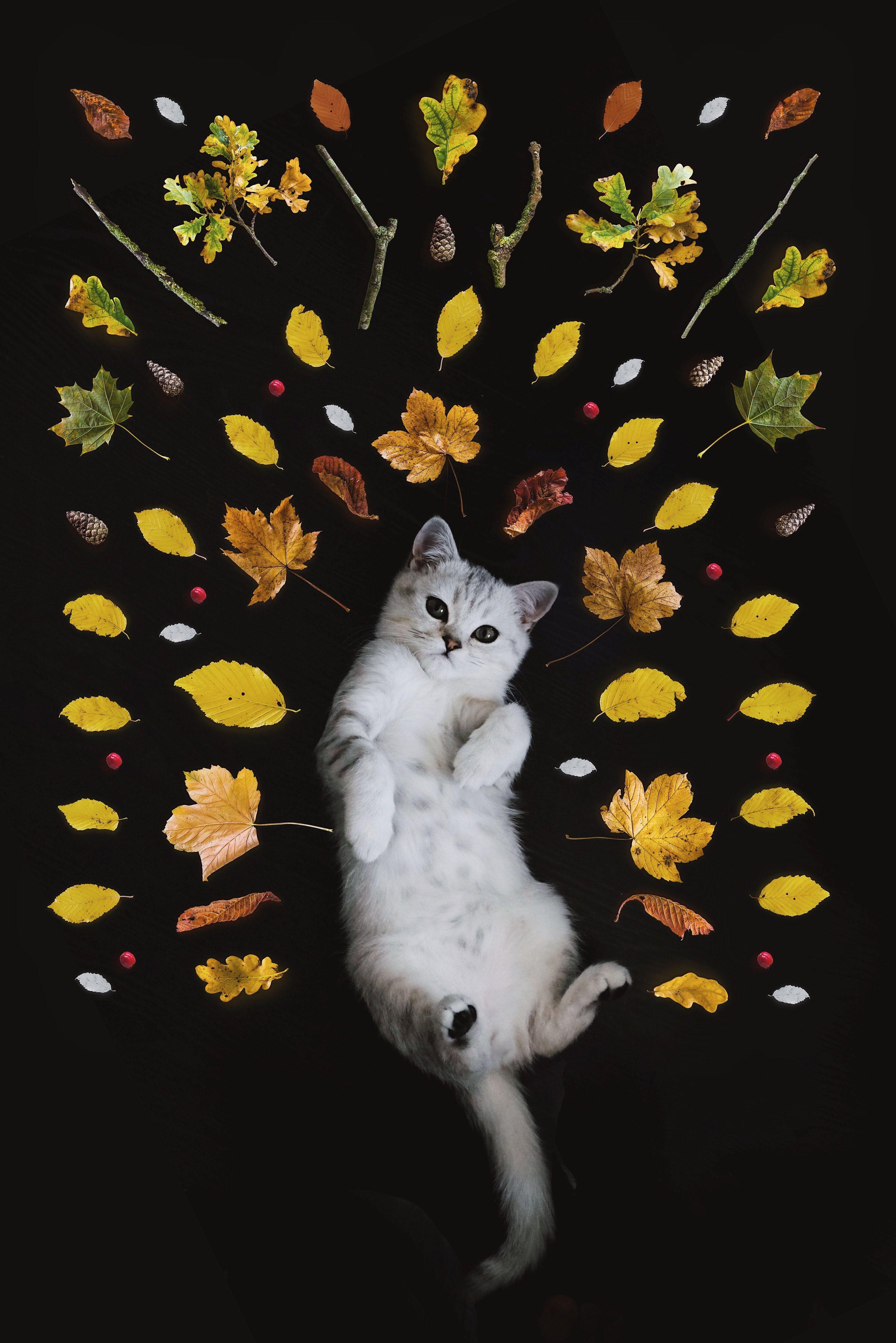 5 Reasons To Talk To Your Cat Silver Tabby Cat Cute Cat Wallpaper Cat Wallpaper