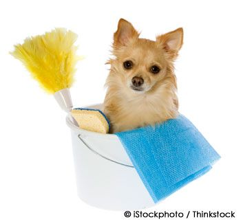 Spring cleaning and pets