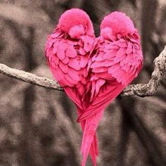 Hearts Like Birds