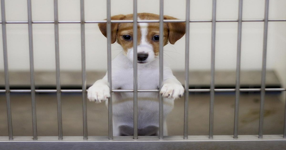 San Francisco Passes Law Saying Only Rescue Animals Can Be Sold In