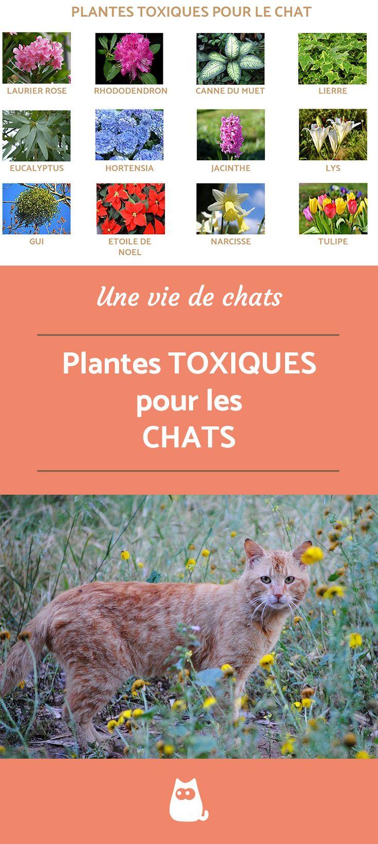 Plantes toxiques pour le chat - GUIDE COMPLET | Astuces ...