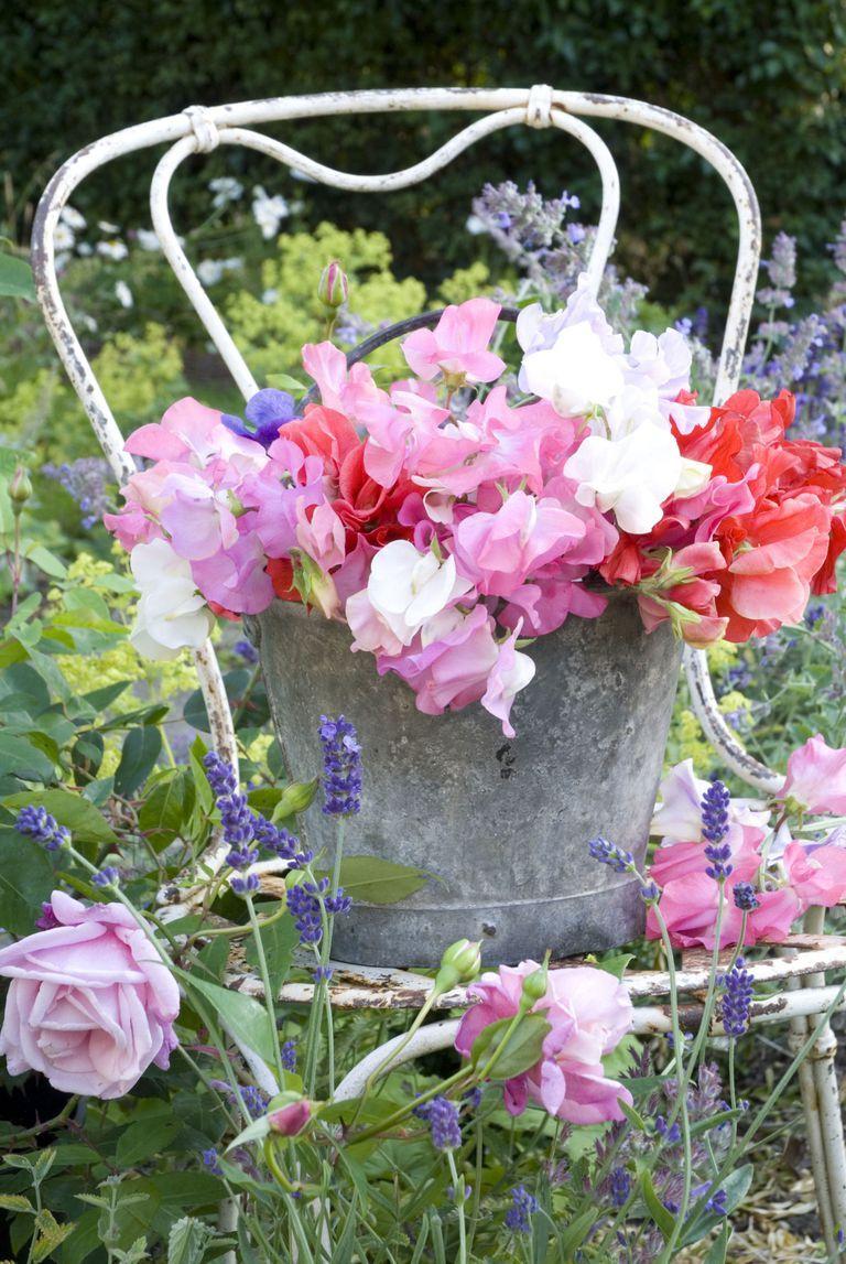 Coltivare Fiori Da Recidere bouquet rustici | bellissimi fiori, coltivare i fiori e