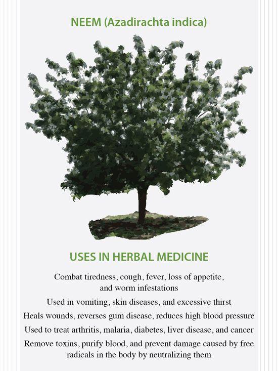 The Health Benefits of Neem | !
