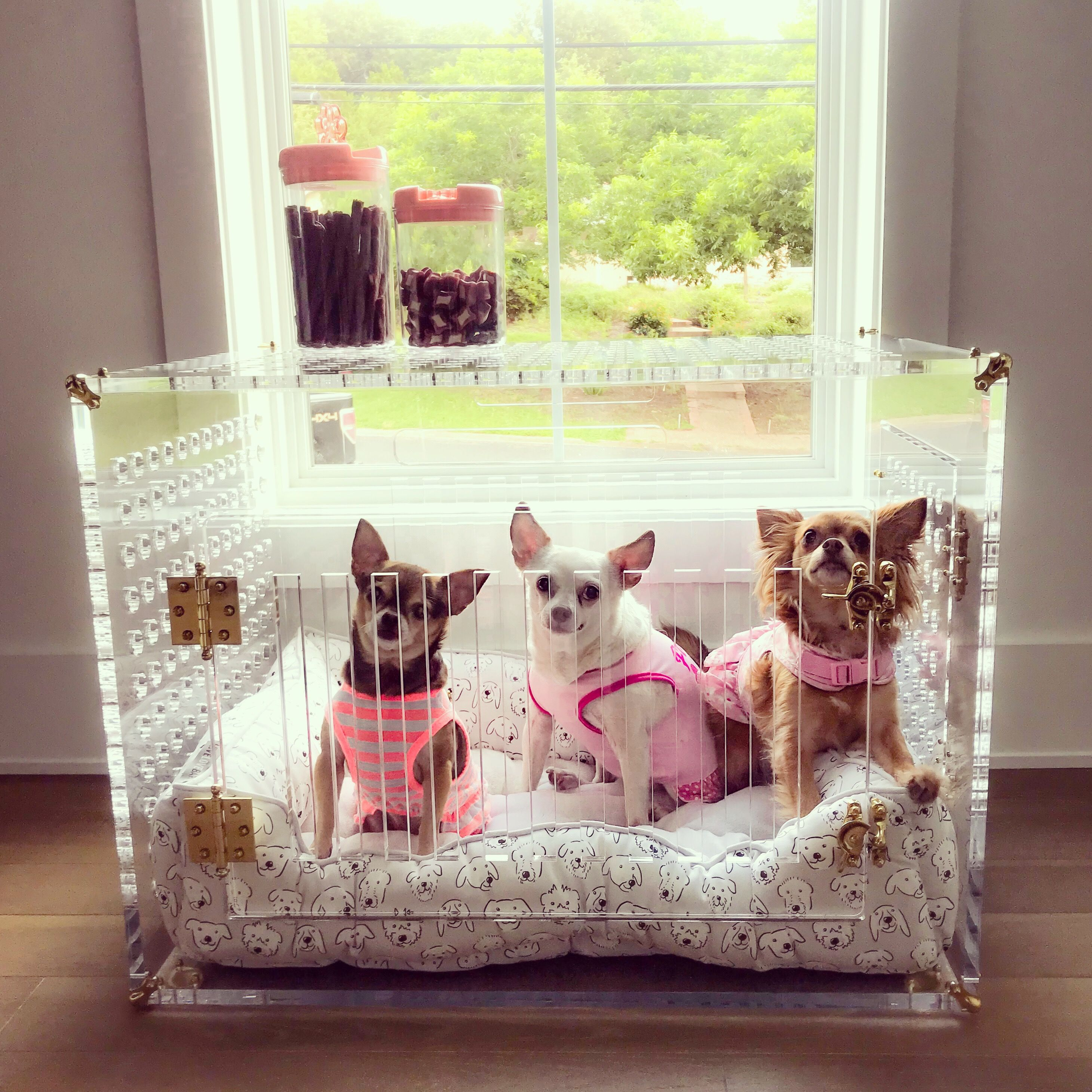 It S Perfect For Dogs Up To 35 Lbs Or In This Case 3 Dogs Under 10 Lbs Each Pet Crate Your Pet Fur Babies