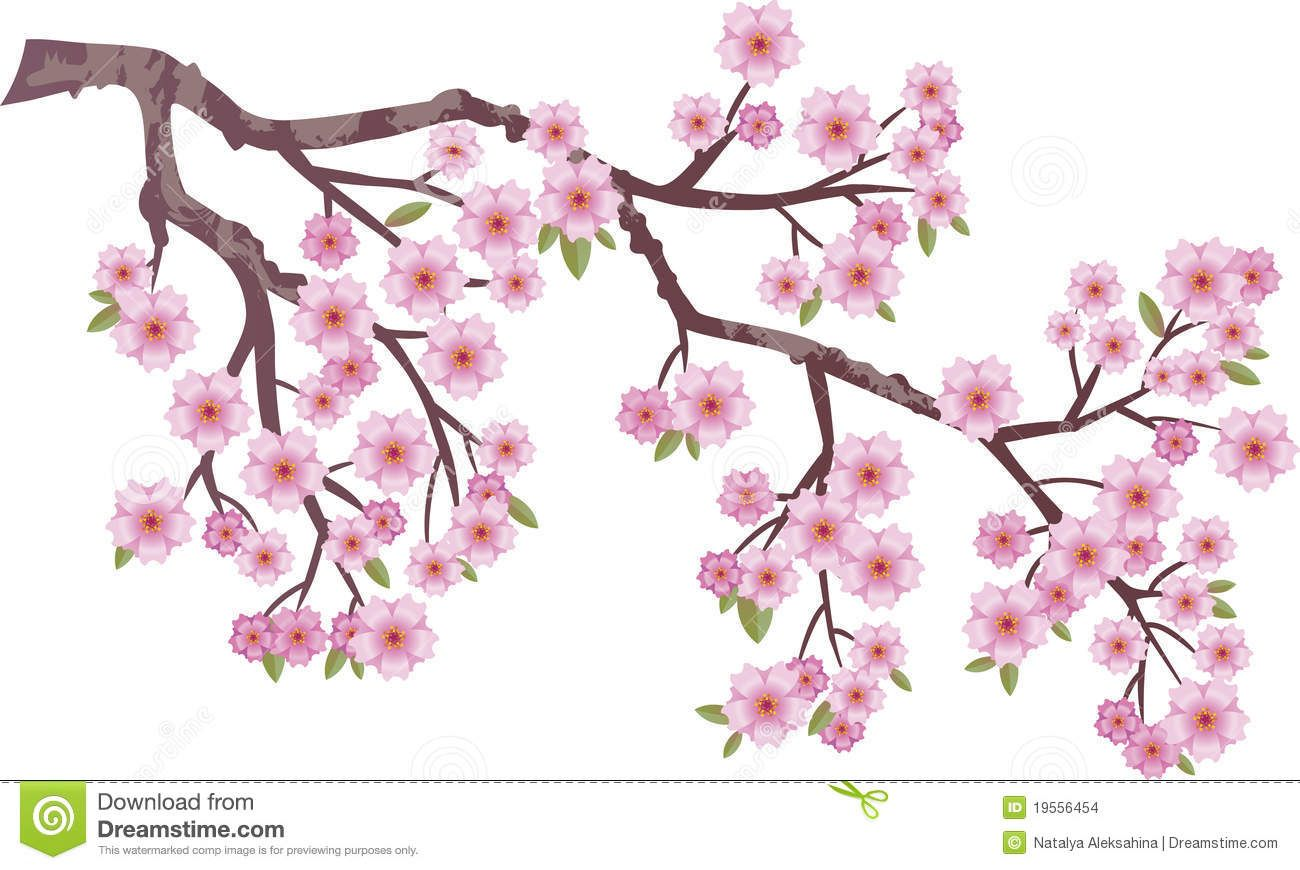 Oriental Cherry Cherry Blossom Drawing Tree Drawing Cherry Blossom Vector