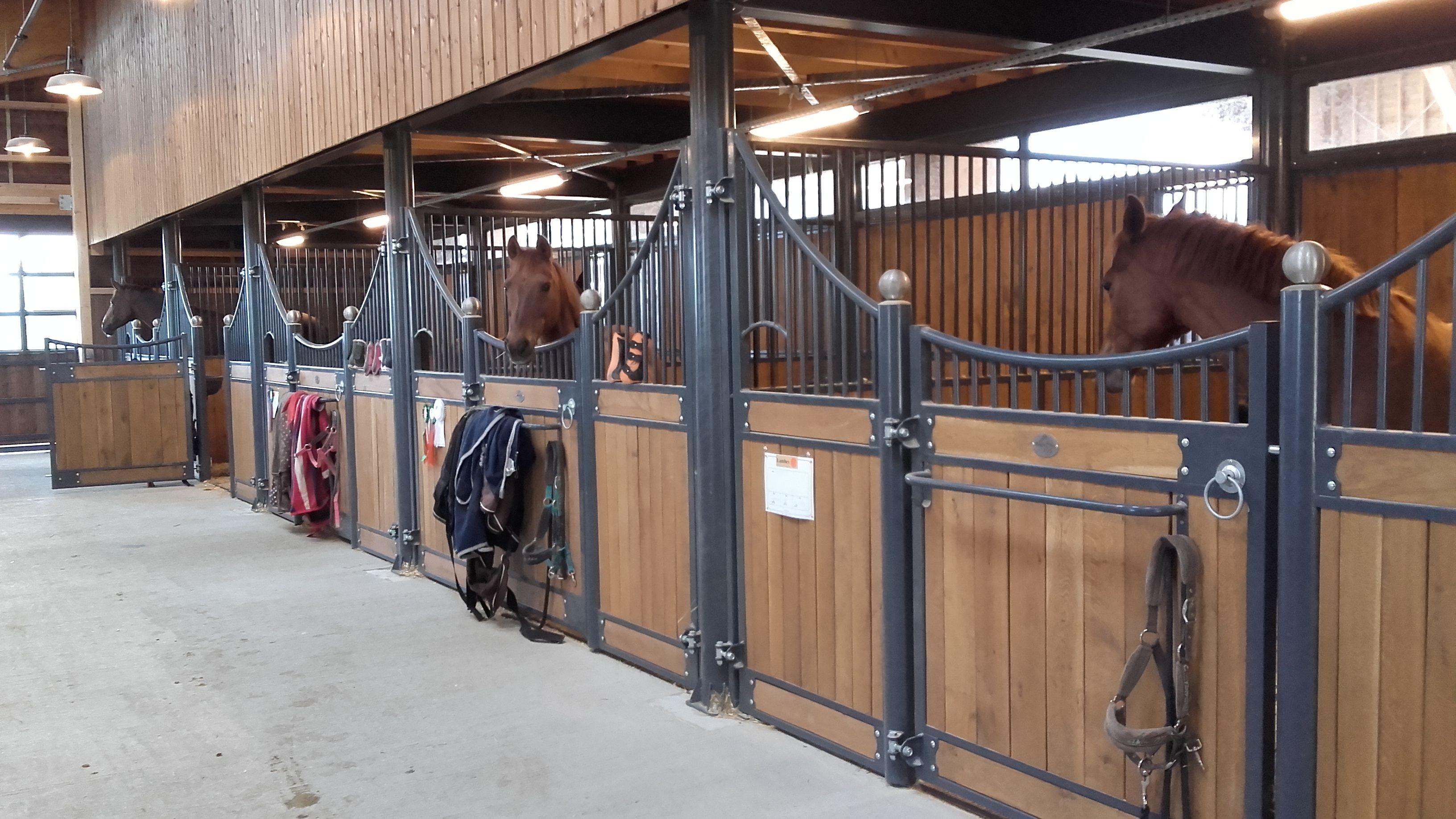 box chevaux photos de chevaux grange equitation cheval futur animaux