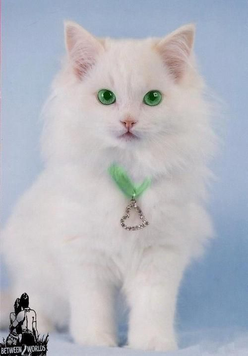 White Cat From Peace Love Con Imagenes Gatos Bonitos Gatos