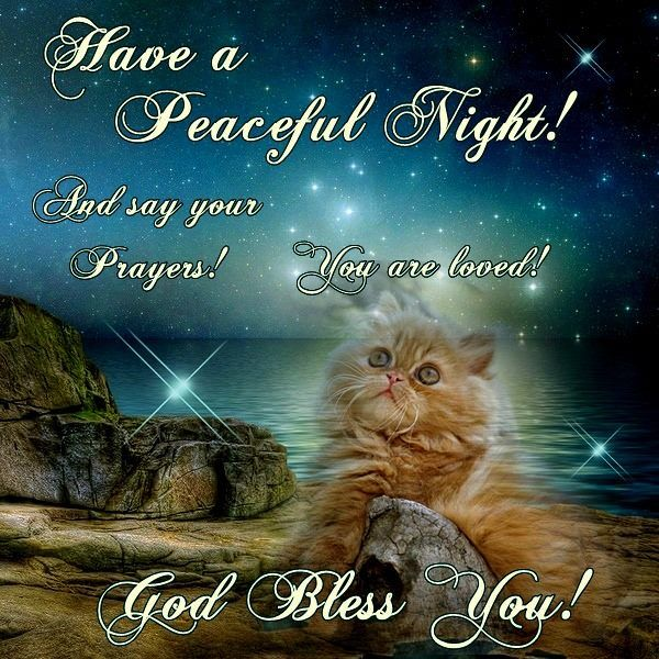 Have A Peaceful Night God Bless You Good Night Flowers Good Night Cat Good Night Everyone