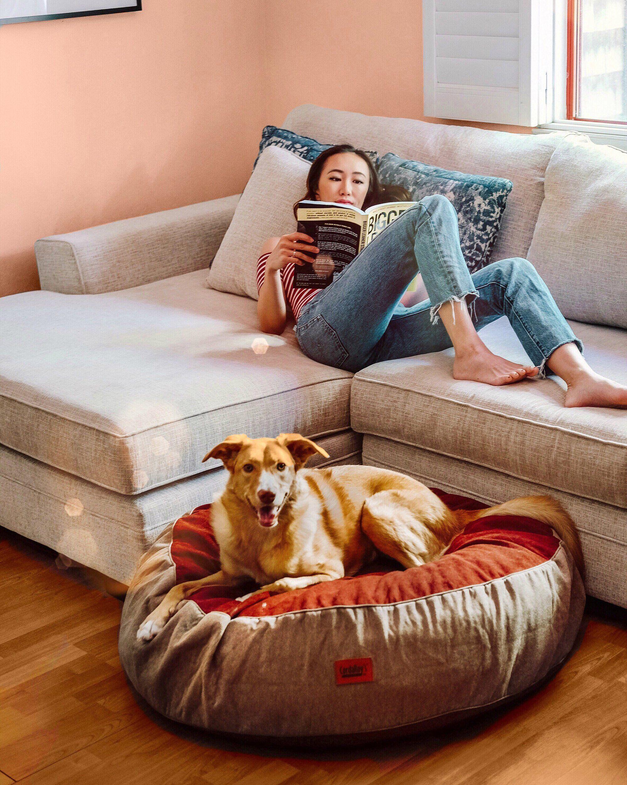 Forever Pet Beds Pet beds, Pets, Pet bed