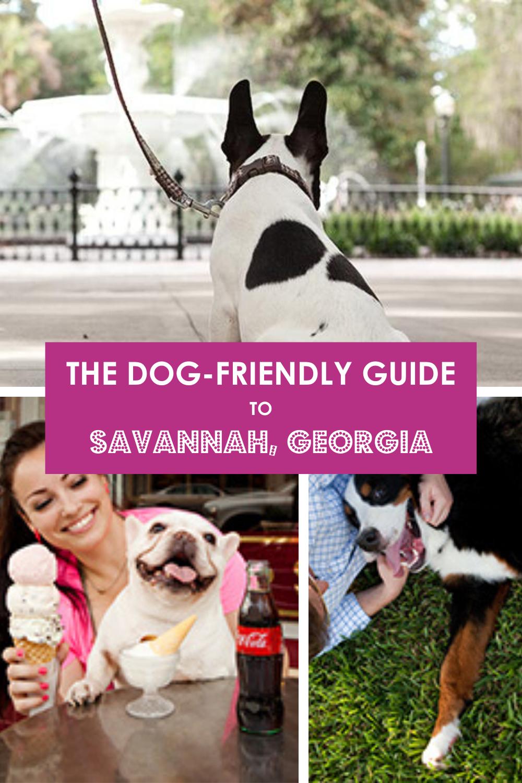 Dog Friendly Savannah City Guide In 2021 Savannah Chat Dog Friends Travel Savannah
