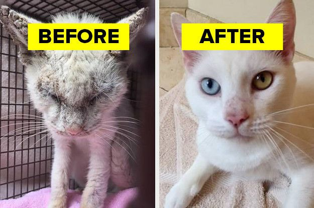 17 Before And After Cat Adoption Photos That Will Make You Happy Cry Cat Adoption Pet Adoption Photos Adoption Photos