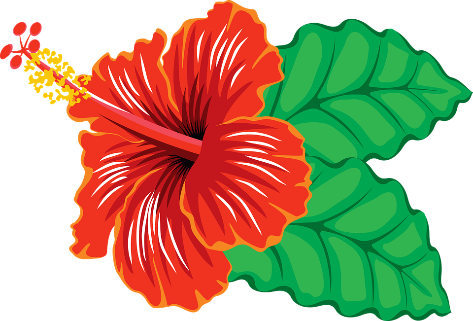 Free Hibiscus Flower Download Transparent Background Better Color Details Than Some Other Clip Art Hibiscus Flower Art Hibiscus Flowers
