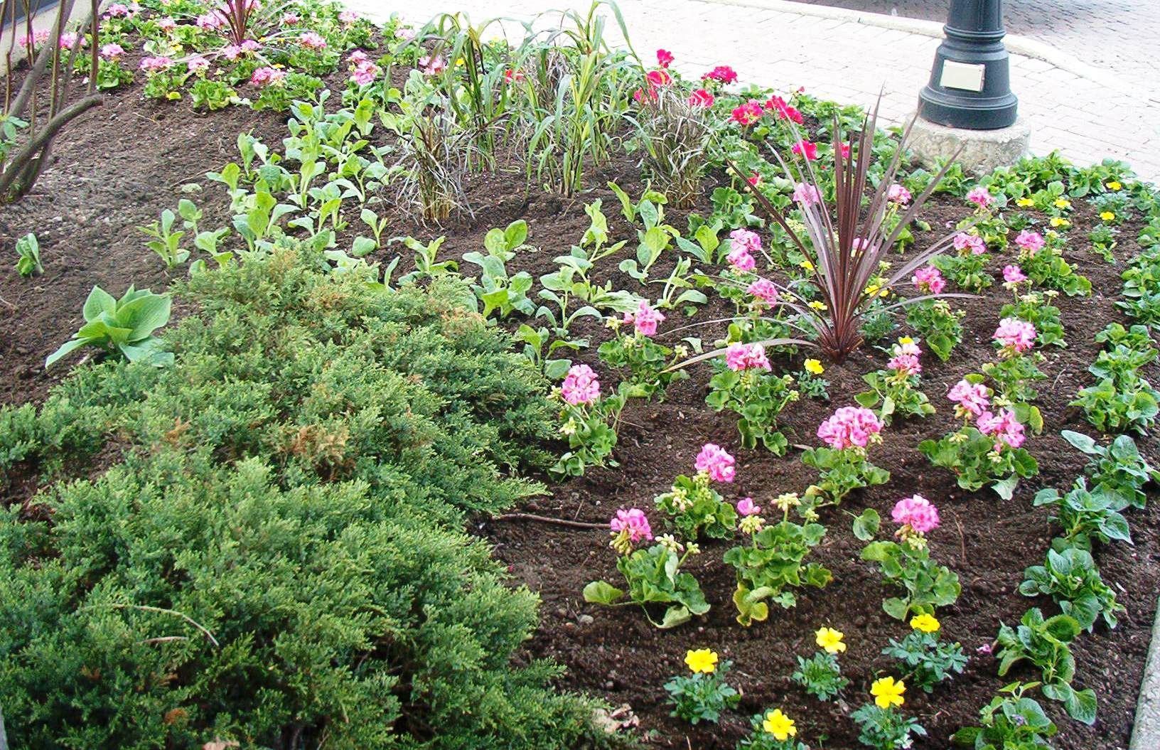 Annual flower planting ideas plants seasonal container