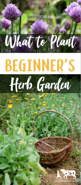 Exceptionnel There Are Many Herbs You Could Grow In Your Garden, But How To Choose Which  Ones? These Tips Will Help Beginneru0027s Choose What To Plant In The Herb  Garden.