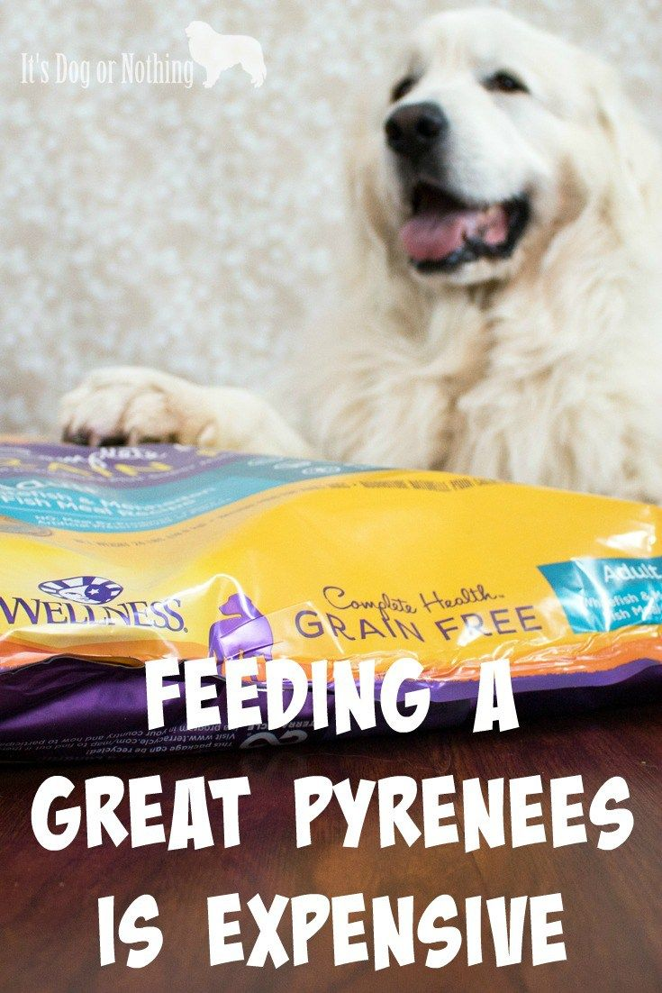 Feeding A Great Pyrenees Is Expensive