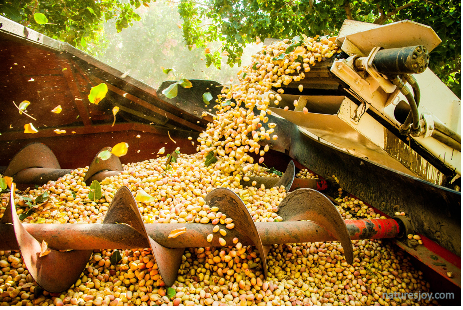 Fresh Harvest Inc Heber Ca