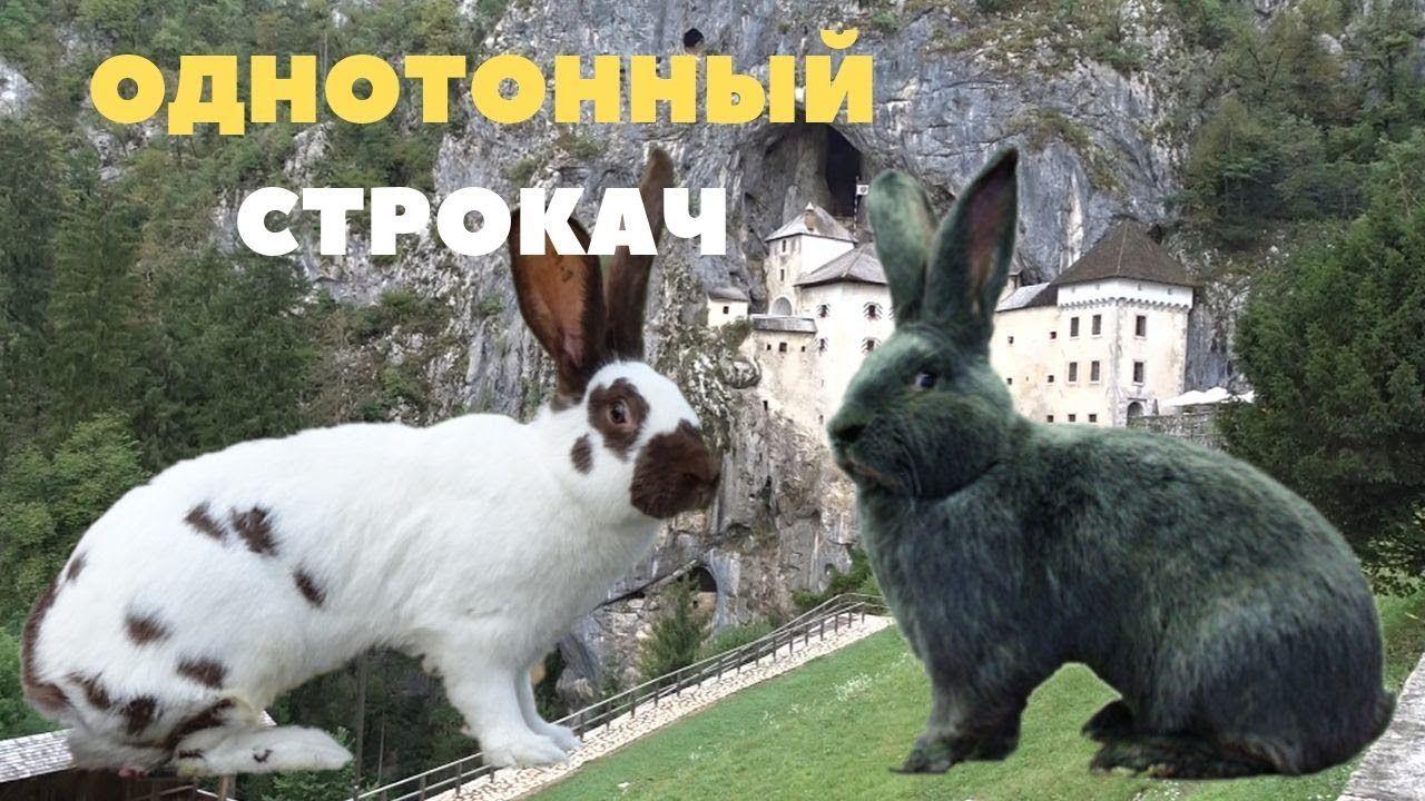 Однотонные крольчата в окроле строкачей/Немецкий Пёстрый ...