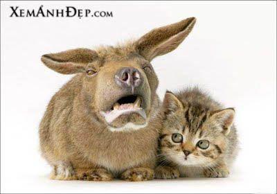 Weird Animal Photos Weird Animals Animals Cats Funny Animals