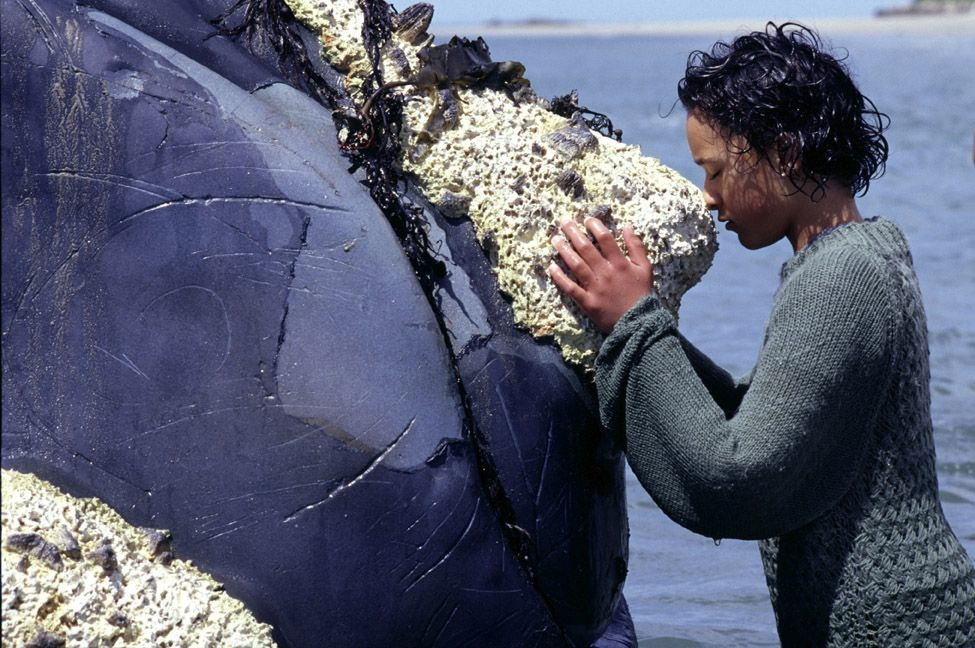 analysis of the whale rider Intercultural training with films f  • whale rider is about a maori girl in new zealand and her conflicted relationship with her grandfather and culture.