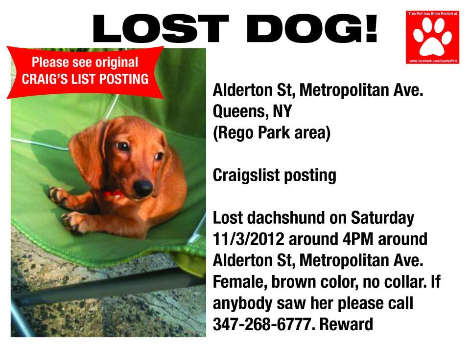 Please Repost Doxie Love Losing A Dog Cute Animal Pictures Dogs