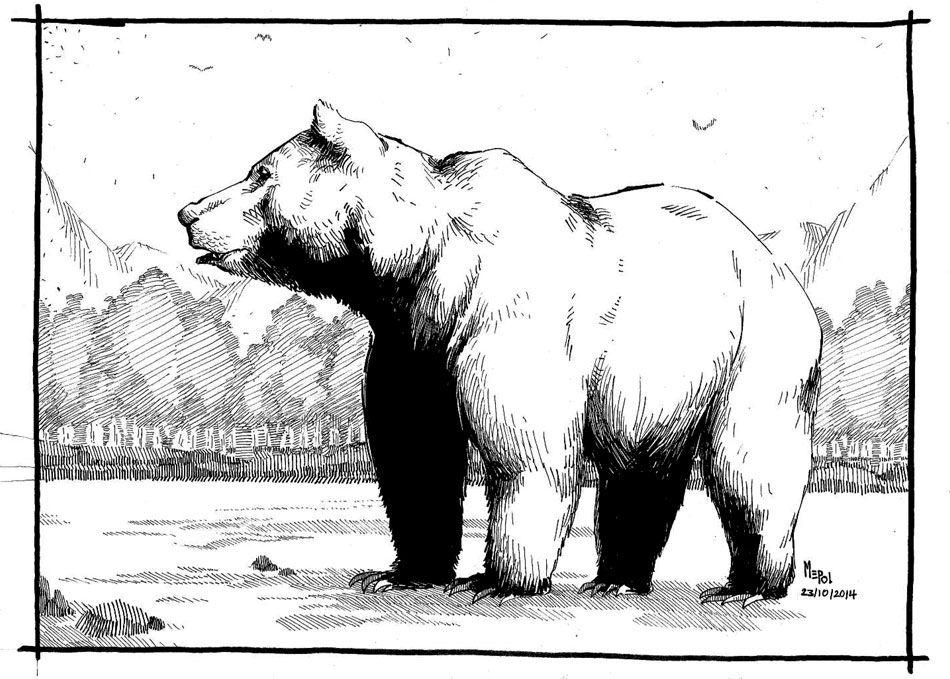 Ilustración: Oso Pardo. #Ilustración de un oso pardo realizada con ...