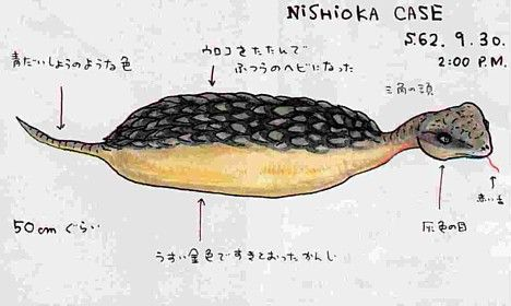 Another reported sighting of Tsuchinoko.