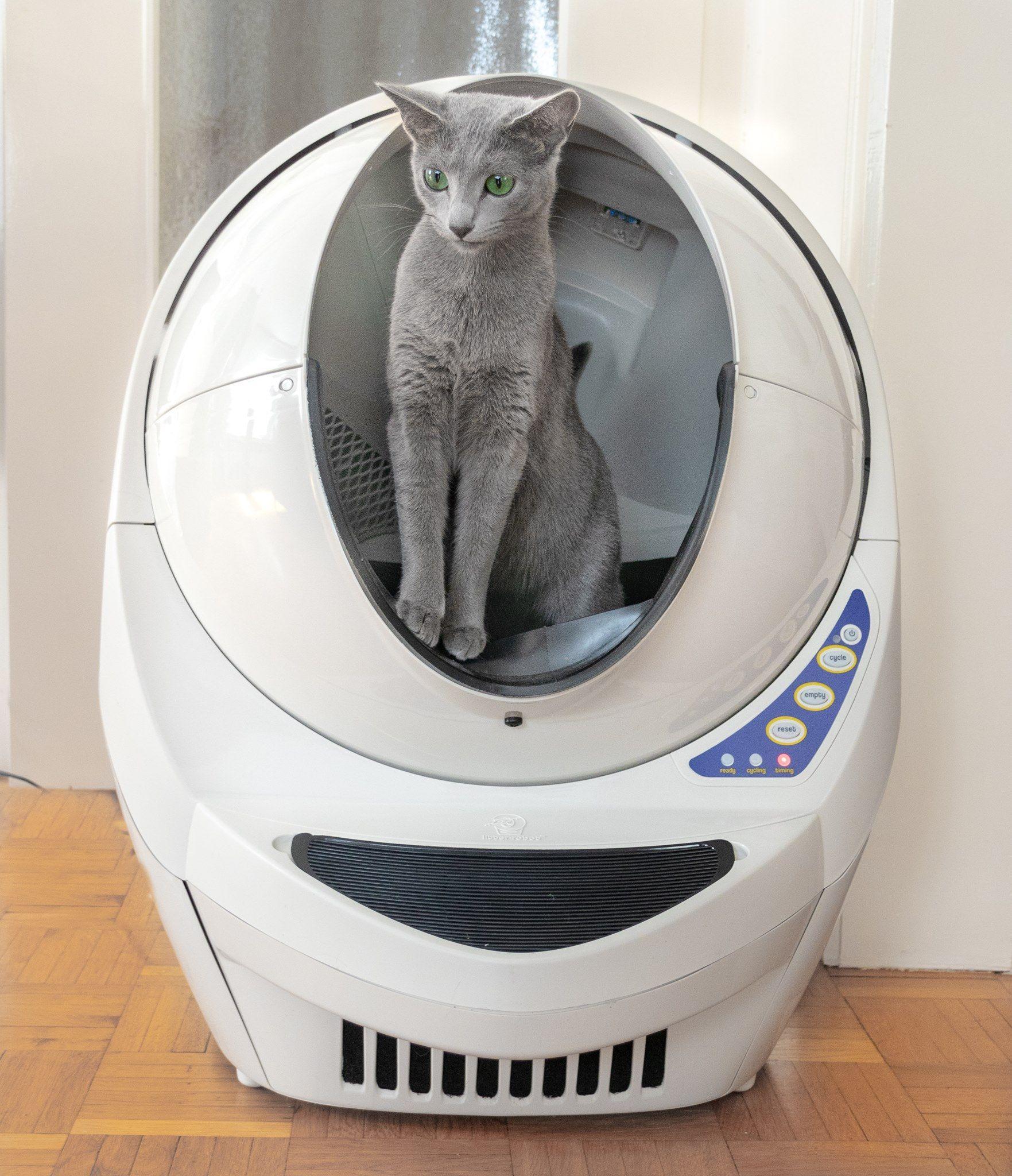 Russians Love The Litter Robot Automatic Cat Litter Litter