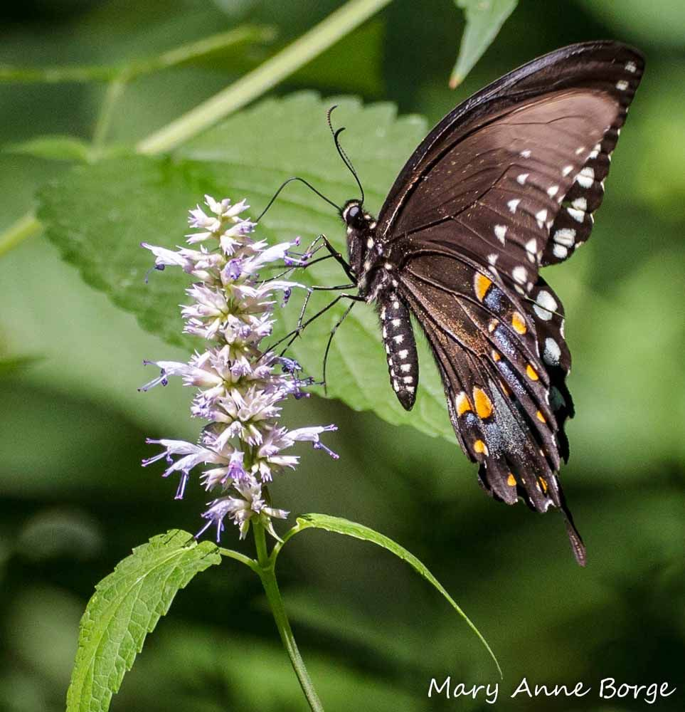 A Butterfly Garden That Embraces The Shade