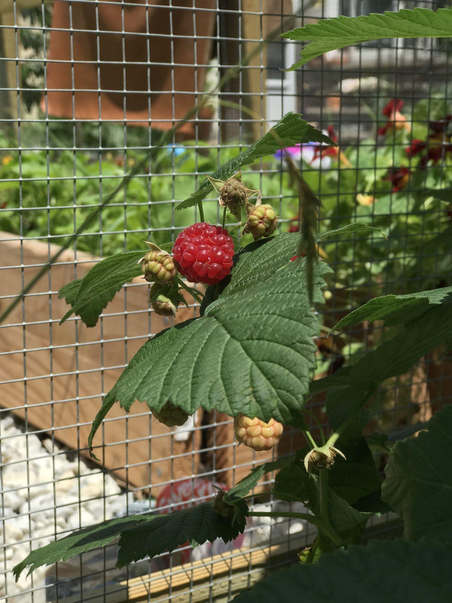 The Urban Gardener Gardening In Any Space Simplyoneden
