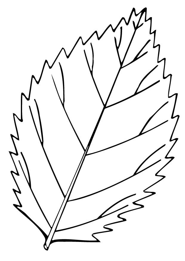 Coloring Book Of Leaves Coloring Page Leaf Img 12948 Flores