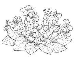 Resultado De Imagem Para Violetas Desenho Riscos Para Pintura