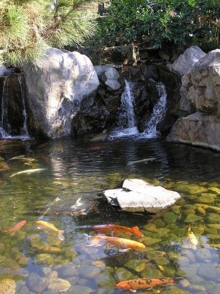 Koi fish pond care water features koi fish pond pond for Koi fish pond care