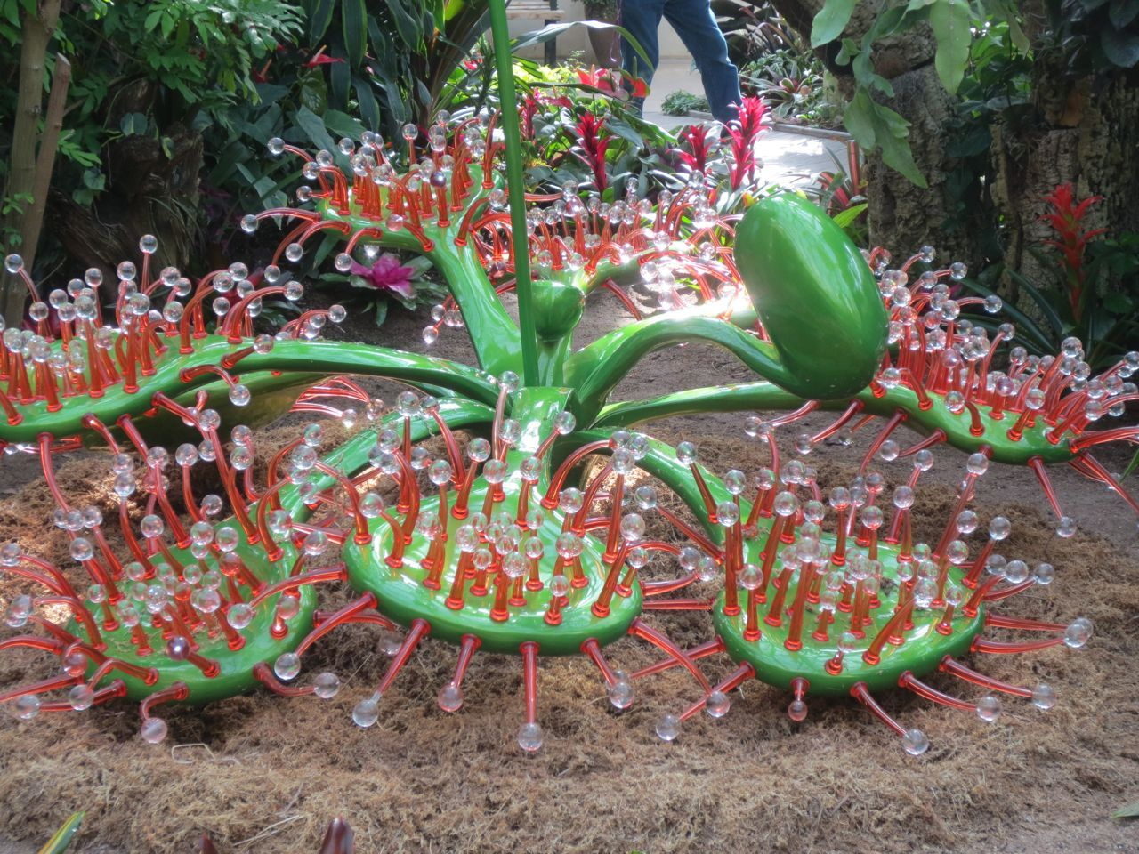 Sundew Drosera Sculpture Savage Gardens Exhibit Carnivorous Plants
