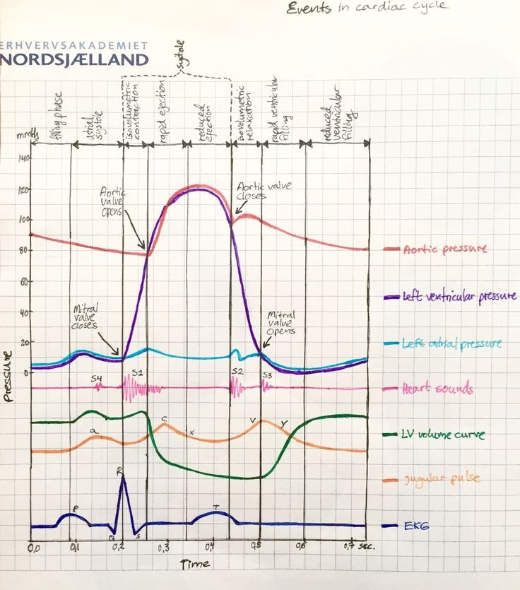 Events In Cardiac Cycle Look At This Understanding This Graph Is A