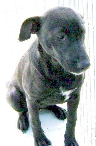 Adopt Babae On Dog Adoption Save Animals Animal Rescue