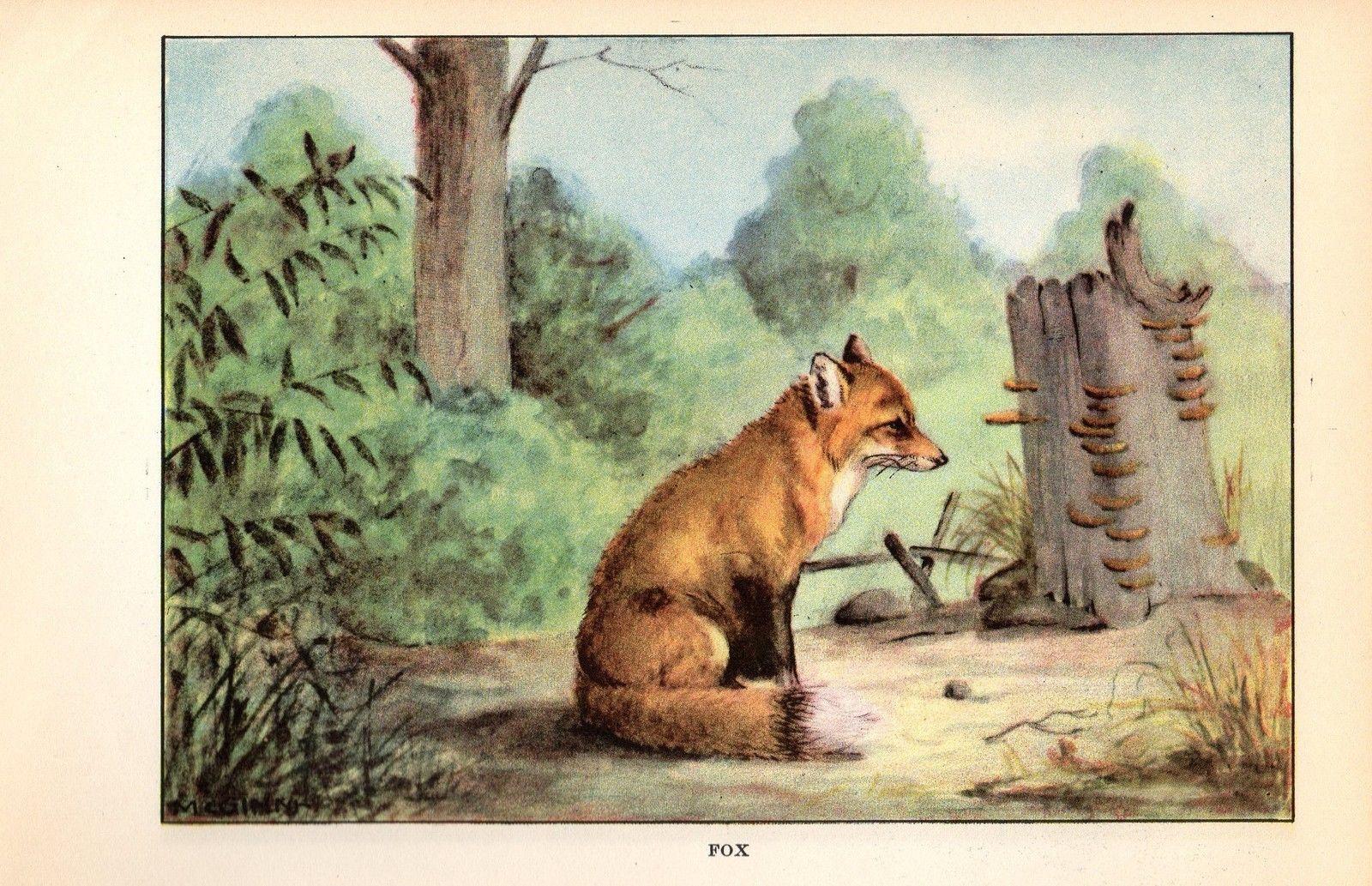 "1926 Vintage ANIMALS /""MOOSE/"" GORGEOUS COLOR Art Print Plate Lithograph"