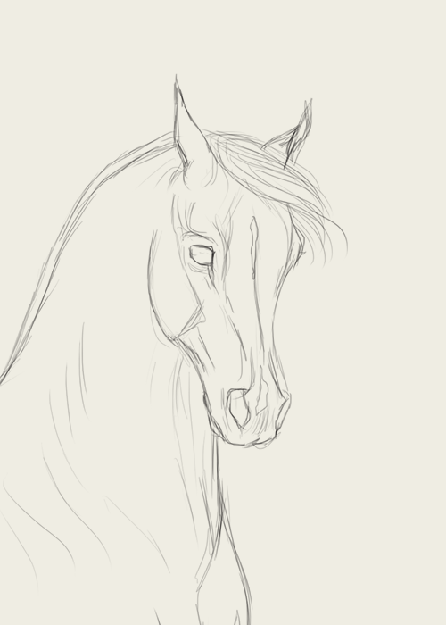 How to draw horse faces | Horse face drawing, Horse drawings ...