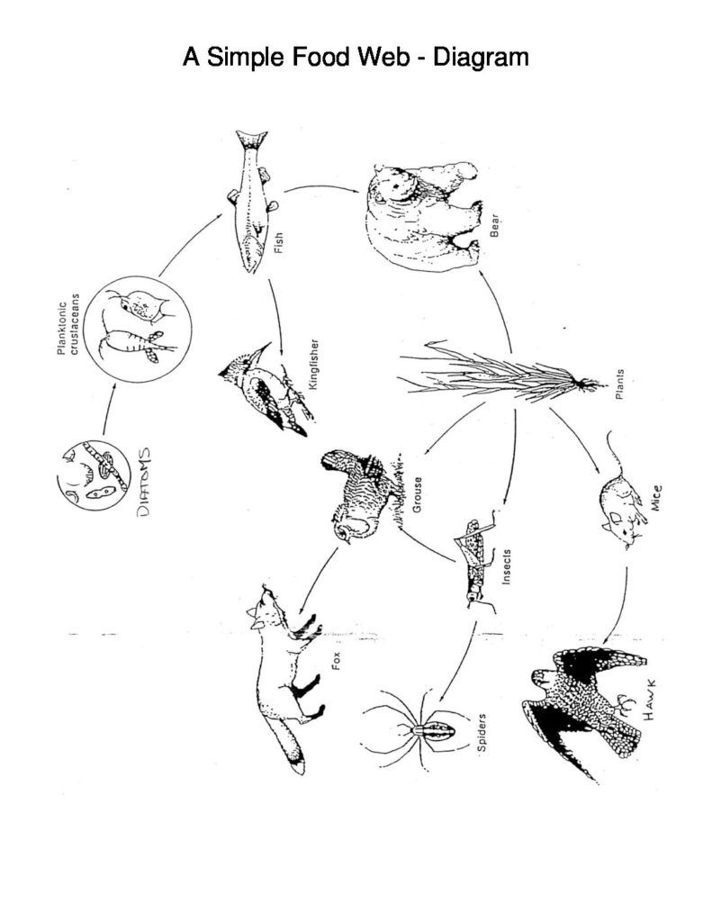 A Simple Food Web Diagram Simple Food Web Food Web Diagram
